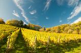 Weingut an der hessischen Bergstrasse