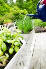 den kleinen kräutergarten pflegen