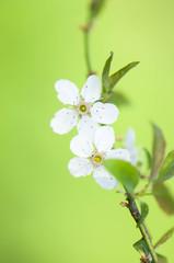 Primo fiore #3