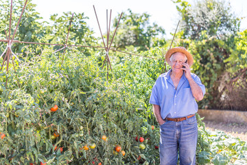 tomatoes and mobile