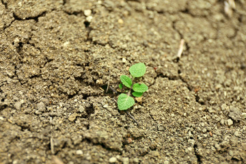 Green young plant on soil background