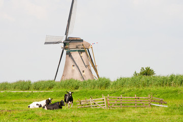 Cows and windmill