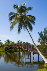 paisaje con puente y cocotero