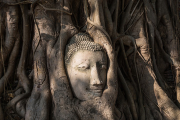 head of sandstone buddha statue in tree roots