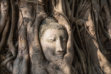 head of buddha statue in tree roots