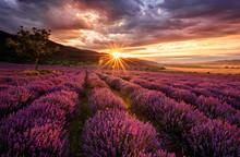 "Постер, картина, фотообои ""Stunning landscape with lavender field at sunrise"""