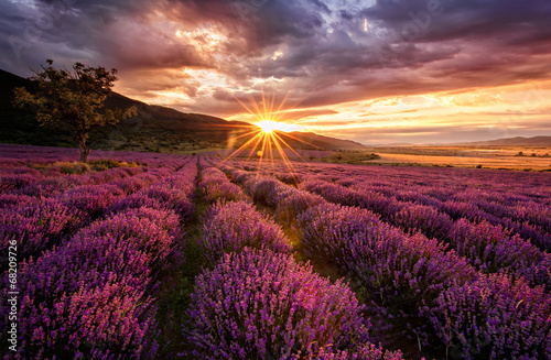 Plexiglas Crimson Stunning landscape with lavender field at sunrise