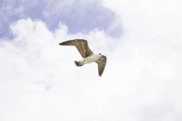 Seagull blue sky