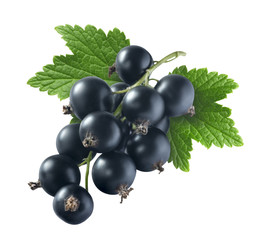 Black currant 1 with leaf isolated on white background