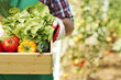Close up of box with ripe vegetables - 68211764