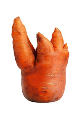 Clumsy ripe carrot