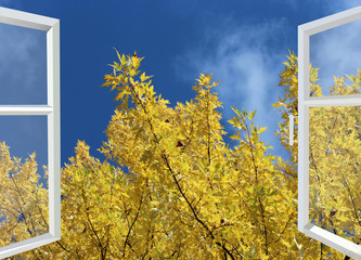 open window to yellow autumn tree and blue sky
