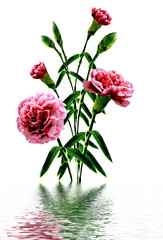 Bouquet of flowers carnation