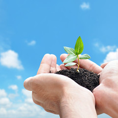 Hand holding green seedling with soil - with space for text