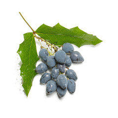 Bunch of blue berries with leaves isolated
