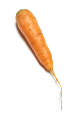 Fresh carrot isolated on the white background