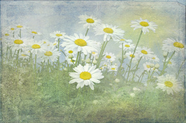 field of daisies with texture overlay