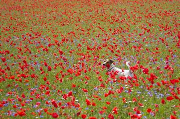 Immerso tra i fiori
