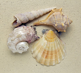 closeup of shells on handmade paper background