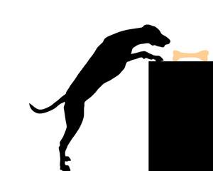 Hund stiehlt Knochen