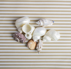 shells composition