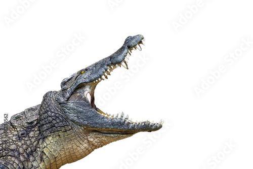 Tuinposter Krokodil crocodil