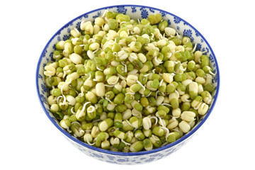 Soaked Mung Bean Sprouts with green skins