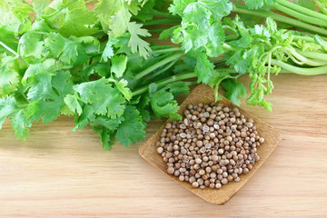 Fresh coriander, cilantro and a bowl of seeds