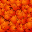 Abstract autumn background with maple leaves
