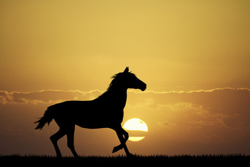 galloping horse at sunset
