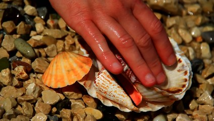 Collecting small shells