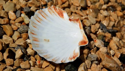Small shell in the water