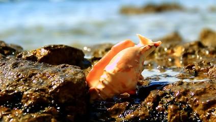 Shell near the sea