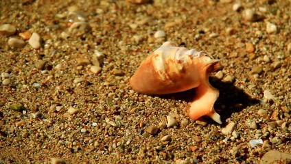 Small shell in the sand.