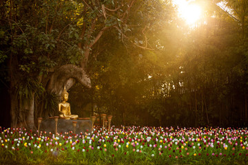 Field of tulips in Wat Phan Tao, Chiangmai Thailand
