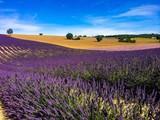 Fototapety lavender in the landscape
