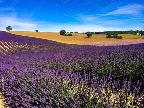 lavender in the landscape © beatrice prève
