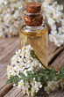 extract of yarrow in a bottle with flowers vertical macro