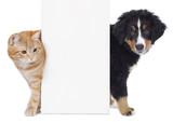 Fototapety Hund und Katze neben weißem Plakat
