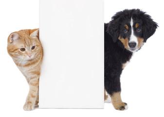 Hund und Katze neben weißem Plakat