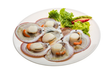 Raw fresh scallop