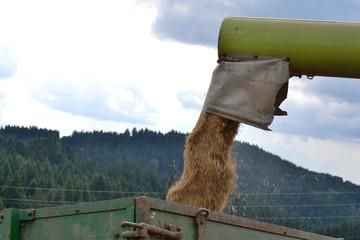 Getreide wird verladen