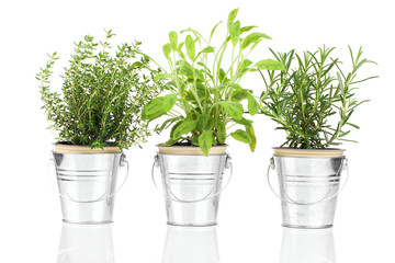 Sage, thyme and rosemary herb plant growing in a distressed pewt