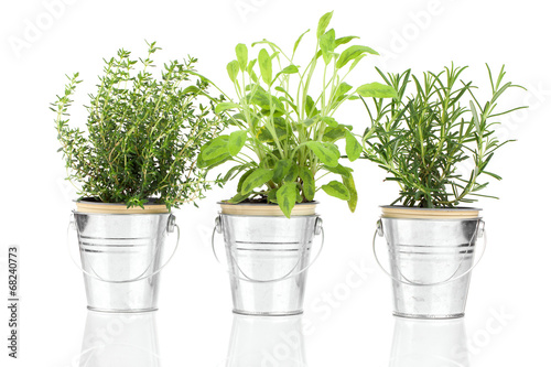 Sage, thyme and rosemary herb plant growing in a distressed pewt - 68240773