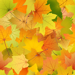 Seamless background of autumn leaves, vector illustration.