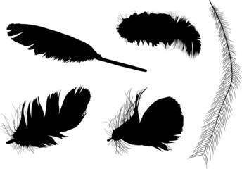 group of five isolated black feathers