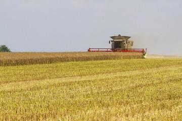 Combine harvester harvesting oil seed rape