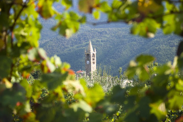 Romanesque bell tower through the vineyards