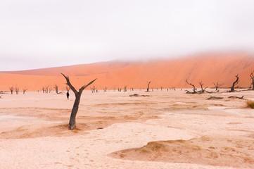 Landscape of Dead Vlei, Sossusvlei, Namib desert, Africa