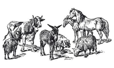 Gros et menu bétail